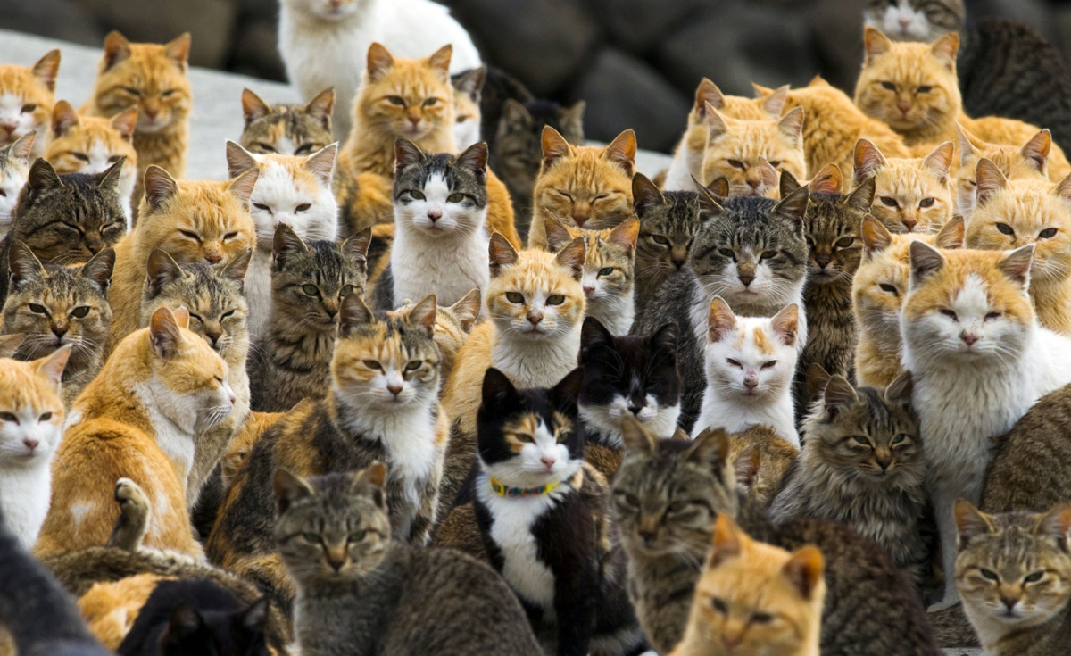 Episode 73: Herding Cats - How To Lead A Team Of Strategists